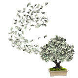 Money tree with dollar banknotes. Isolated on white background. 3d render Stock Images