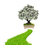 Money tree with dollar banknotes and road with green grass Royalty Free Stock Images
