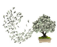 Money tree with dollar banknotes. On white background. 3d render Royalty Free Stock Photography