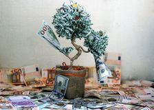 Money tree. Tree of dollar bills. The money tree stock photography