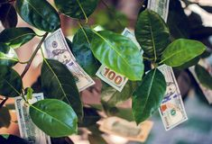 Money tree with dollar bills on leaves stock photography