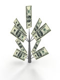 Money tree from dollar. Business concepts Stock Photos