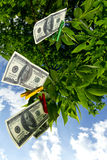 Money tree. Dollar currency hanging on a green tree stock photography