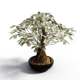 Money_tree_dollars Stock Photos