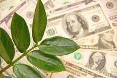 Money tree and dollars Stock Image