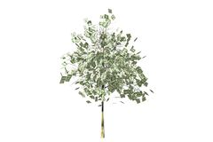 money tree with dollars leaf Royalty Free Stock Image