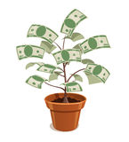 Money tree with dollars in pot Royalty Free Stock Photo