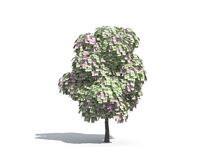 Money tree of Euro Royalty Free Stock Image