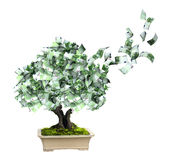 Money tree with euro banknotes. 3d money tree with euro banknotes.  on white background. 3d render Royalty Free Stock Photos