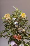 Money tree with euro banknotes Stock Photography