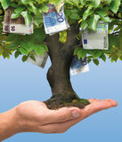 Money tree - euro Stock Images