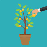 Money Tree, Financial Growth Flat Concept Vector Illustration. EPS10 Royalty Free Stock Photo
