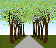 Money Tree Forest Path. An image of a money tree forest Royalty Free Stock Photos