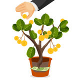 Money tree with golden coins. Assets useful or valuable thing Stock Photo