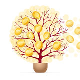 Money tree and golden coins Stock Photo