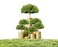 Money tree growing from coins. Concept of money tree growing from coins Royalty Free Stock Photo