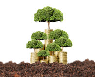 Money tree growing from coins Royalty Free Stock Photography
