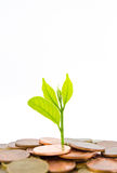 Money Tree growing from a pile of coins. Isolated on white background stock photo