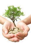 Money tree growth Royalty Free Stock Images