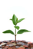 Money Tree 3 Royalty Free Stock Photo