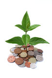 Money Tree 2 Royalty Free Stock Photography