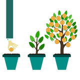 Money tree growth concept Stock Photos