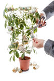 Money Tree and hands of men. financial success. Royalty Free Stock Photos