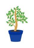 The money tree Stock Photo
