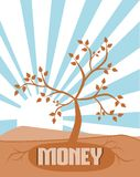 The money tree Stock Photo