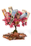 Money tree isolated Stock Photography