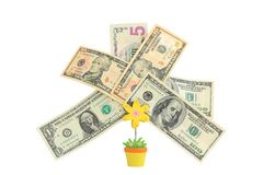 Money tree,   Isolated on white. Stock Images