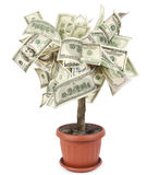 Money tree. Made of dollar bills, isolated on white background stock photo