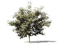 Money tree metaphor Royalty Free Stock Photo