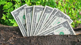 Money tree. Tree with money - one dollars Royalty Free Stock Images