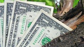 Money tree Stock Image