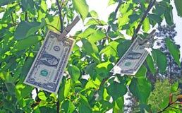 Money tree. Tree with money - one dollars Royalty Free Stock Photography