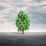 Money tree outdoors. Royalty Free Stock Photography