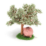 Money tree and piggy bank, Royalty Free Stock Image