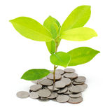Money Tree on a pile of coins. Isolated on white background Royalty Free Stock Photos