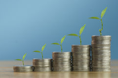 Money tree on pile of coins. Concept in loan, save, finance and account for capital  in business Stock Photography