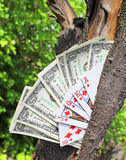 Money tree and playing cards Royalty Free Stock Images