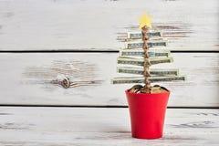 Money tree in pot. Stock Image