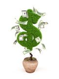 Money tree. Potted tree in the form of a dollar sign with 100 dollar bills around it Royalty Free Stock Photography
