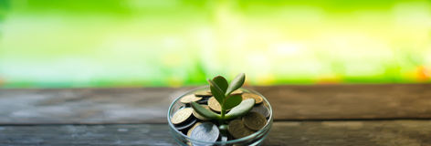 Money Tree on spring background Royalty Free Stock Images