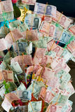 Money tree in Thailand Stock Photo