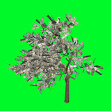 Money tree US dollar big profit Stock Images