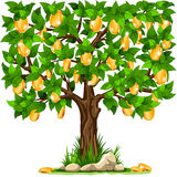 Money tree. Vector illustration of a money tree with golden coins on white background Stock Photography