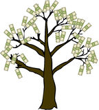 Money Tree on White Stock Image