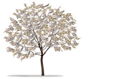 Money Tree on white background Stock Photo