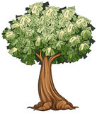 A money tree Royalty Free Stock Photos
